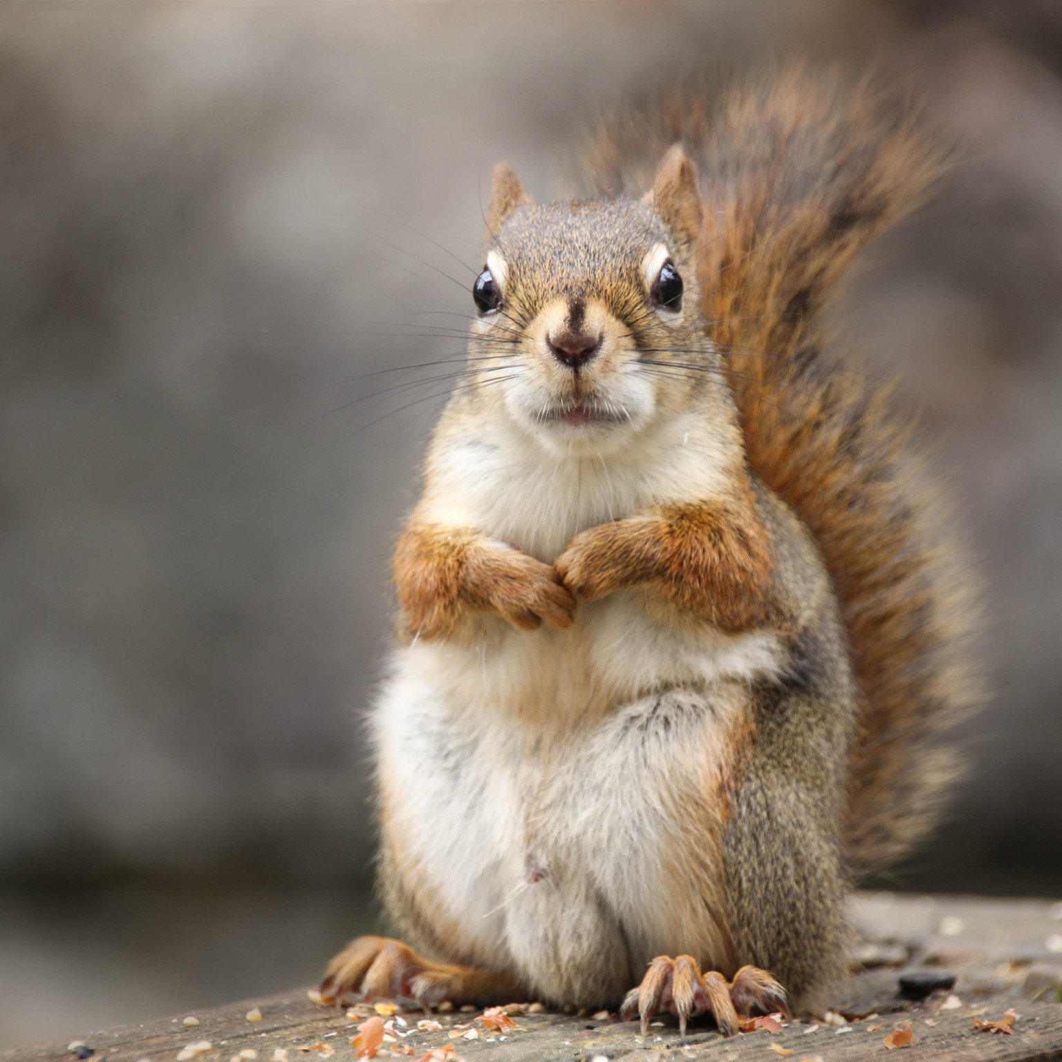The Squirrel Syndrome Huffpost