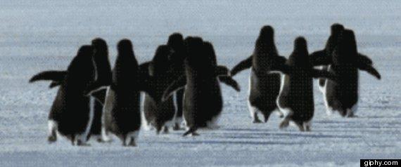 running penguins gif