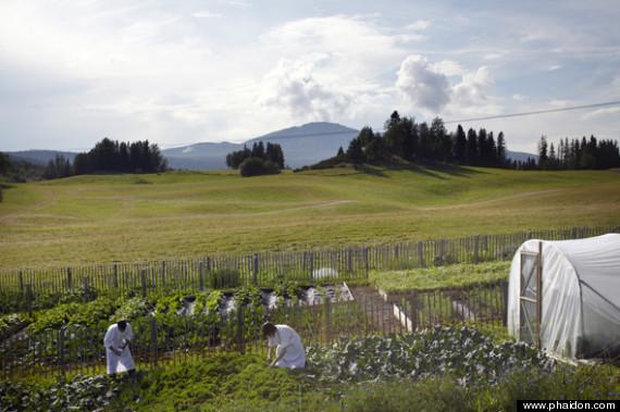 fäviken garden