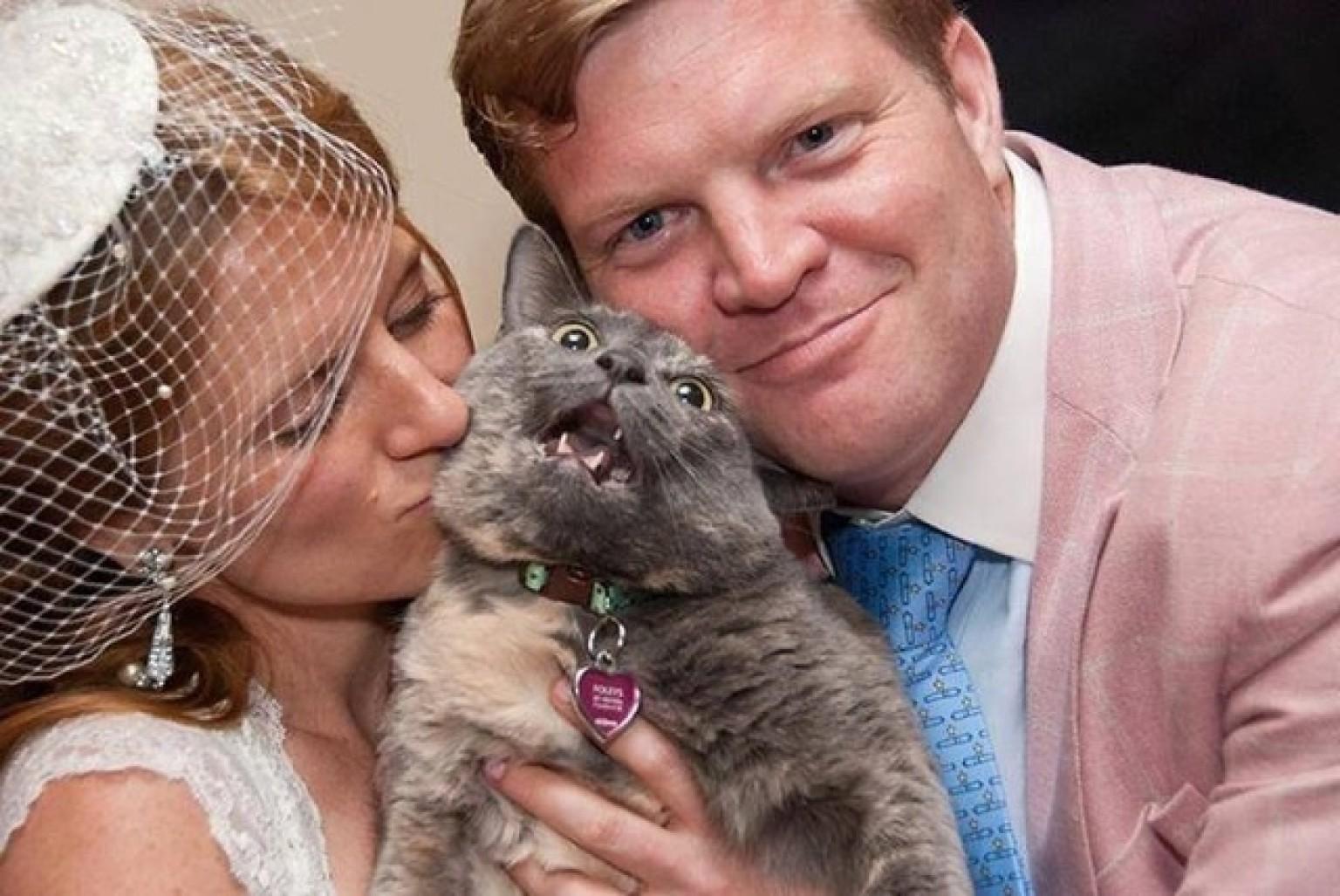 Cat wedding photo features a major feline meltdown huffpost junglespirit Choice Image