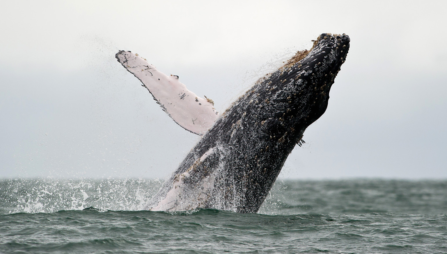for the man who jumped into the sea to save a dying whale huffpost