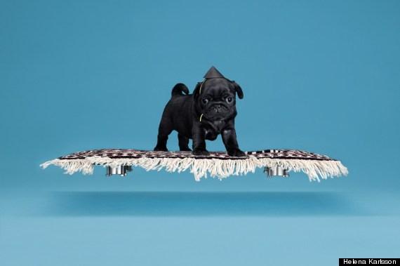 pug floating rug