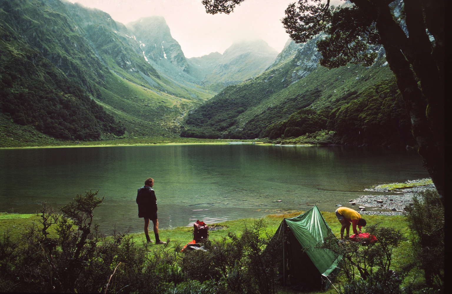 Nový Zéland Facebook: New Zealand's Environment-Friendly Image Marred By Dairy