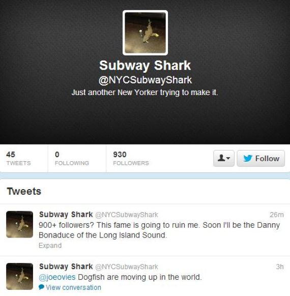 twitter subway shark