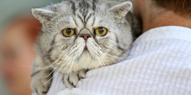 A cat (stock image)