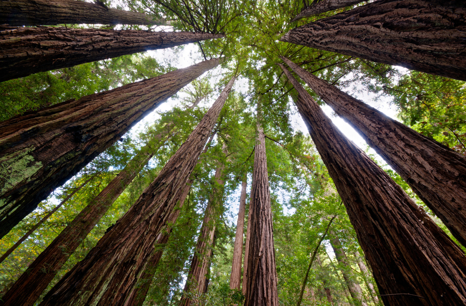 analysis of planting a sequoia Planting a sequoia by dana gioia february 1990 february 1990 poems february 1990  but today we kneel in the cold planting you, our native giant,.