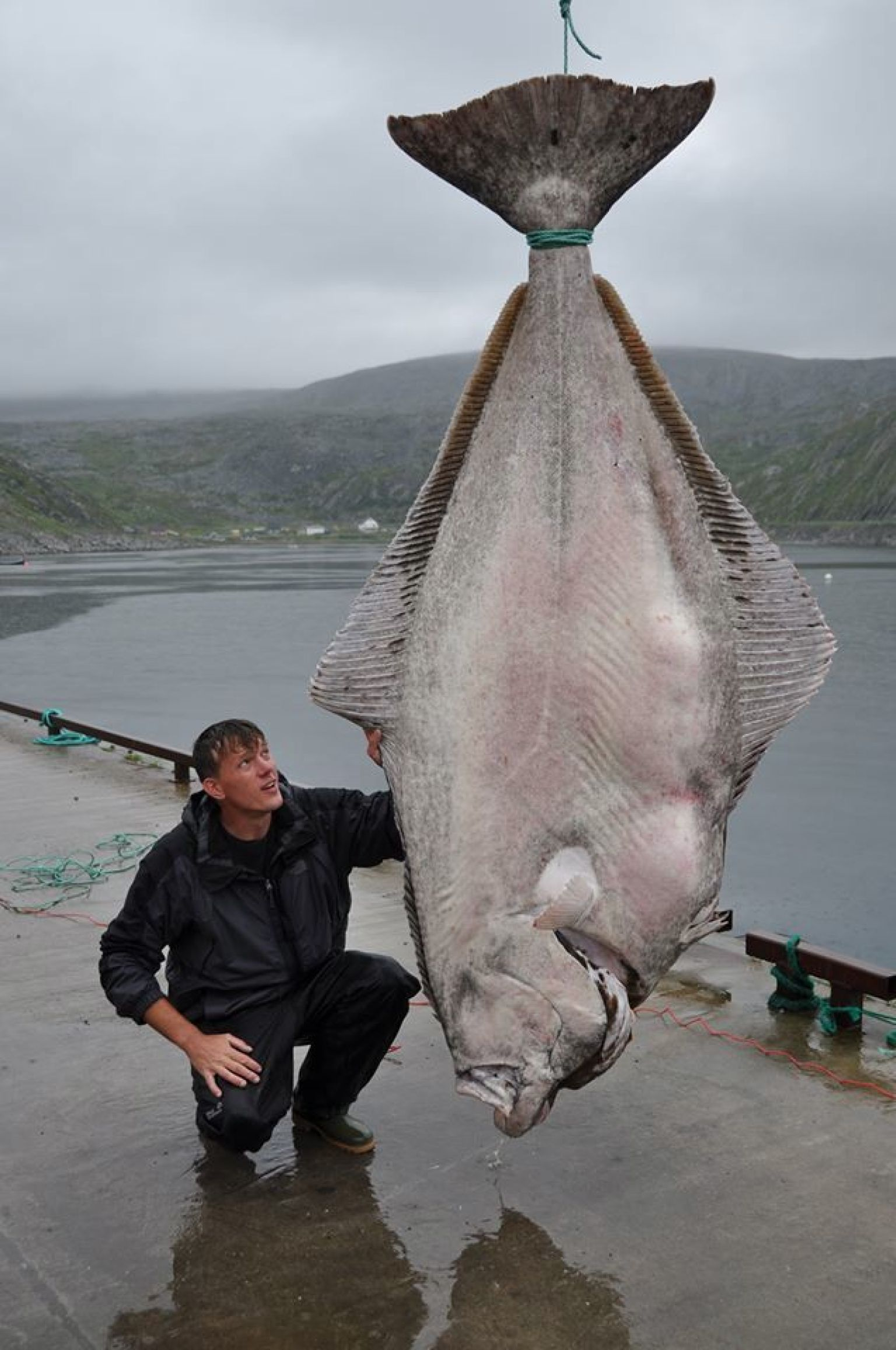 515 pound halibut caught by marco leibenow near norway may for Fish world on facebook
