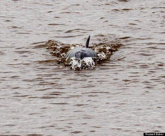 dolphin dee