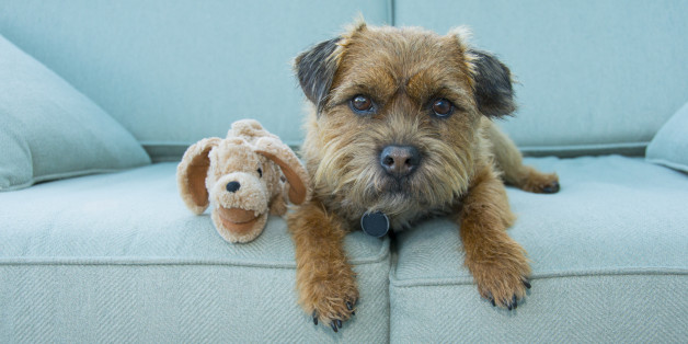The Best Pet Friendly Furniture