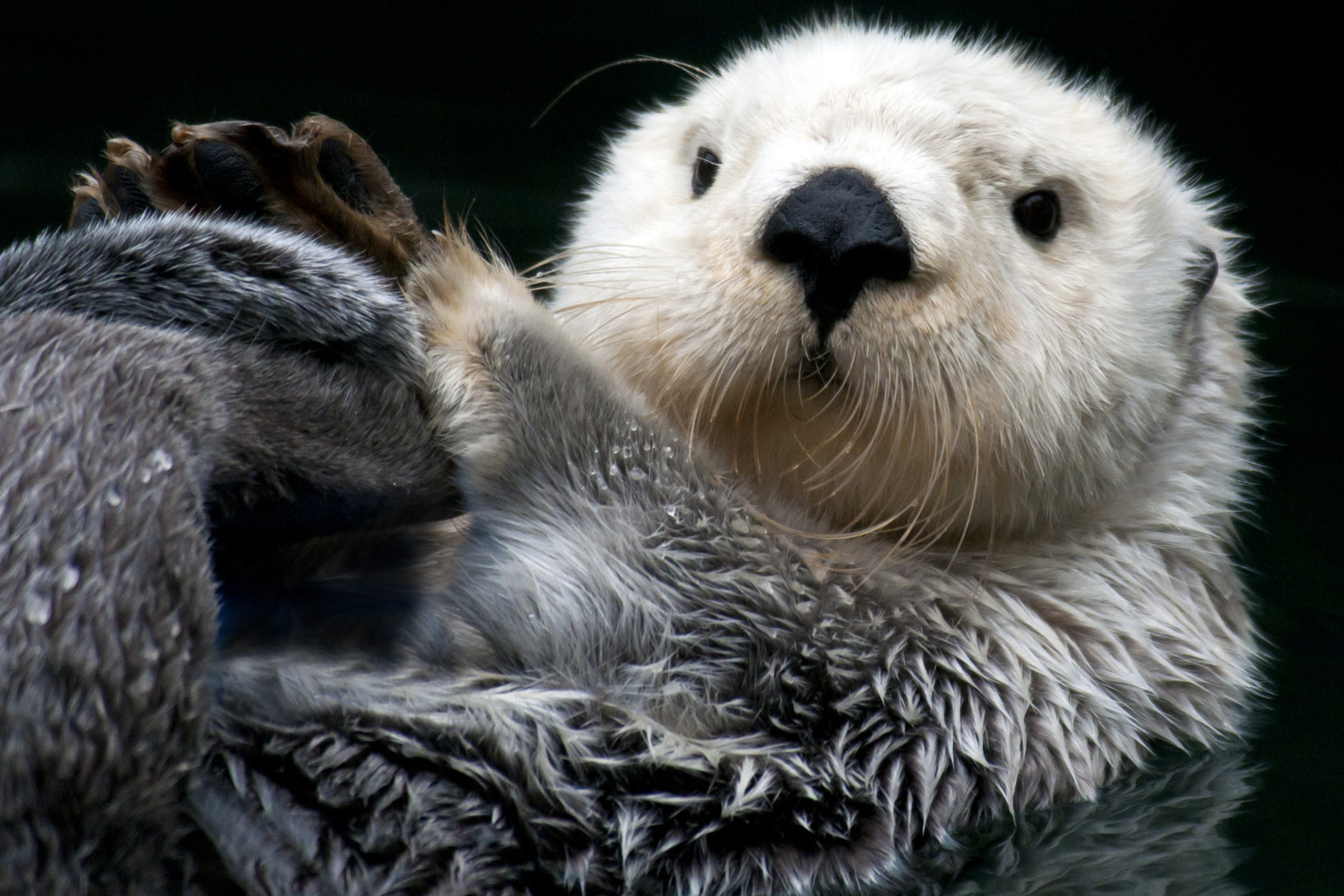 an analysis of the sea otters effects on the ecosystem In marine ecosystems at equilibrium, however, sea otters are often  this  ecological cascade effect of secondary extinctions resulting  based on the  information in the passage, what is the most likely meaning of holdfast.