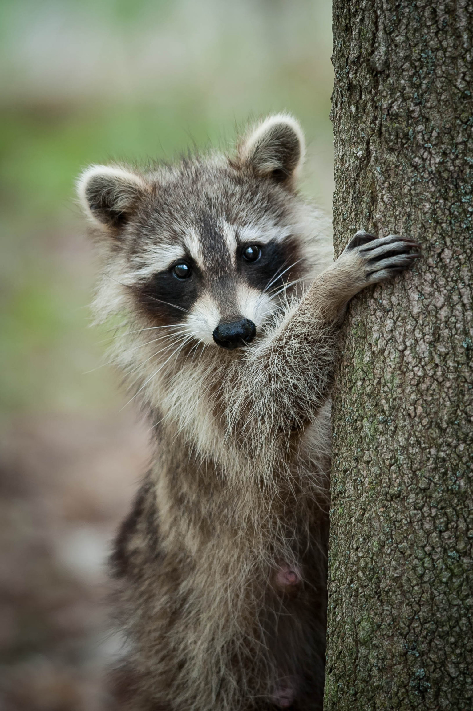 saw a raccoon outside in the daytime it might not be what you