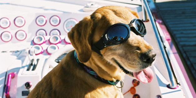 (UNDATED FILE PHOTO): A dog wears the new Doggles, a new protective eyewear for dogs, in an undated photo. Doggles claim to protect dog's eyes from foreign objects, wind, and UV light.  (Photo Courtesy of Doggles.com/Getty Images)