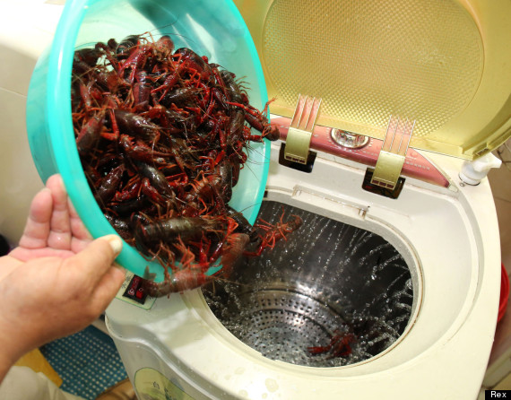 pensioner creates washing machine vegetables