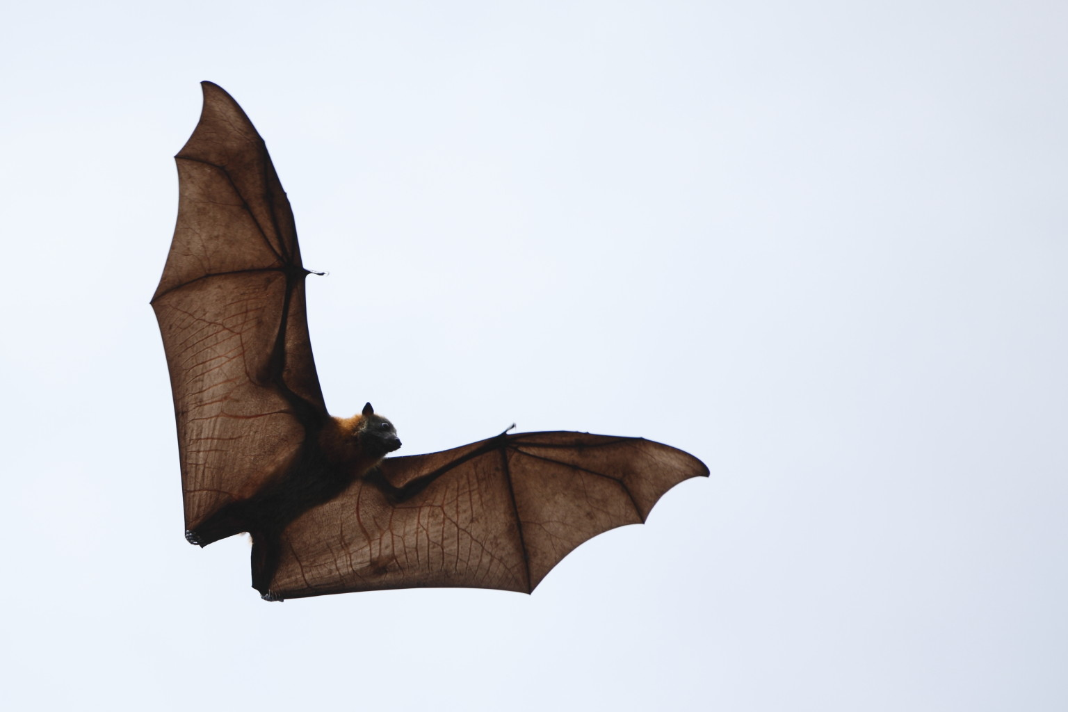 struck by a bat my son u0027s rabies scare huffpost