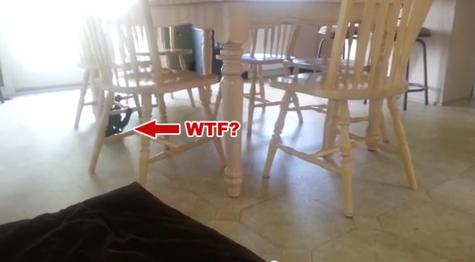 Cat Who Uses Chairs Like Monkey Bars Might Need An Exorcism (VIDEO) |  HuffPost