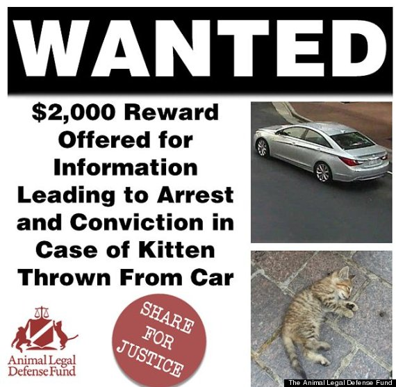 reward for dead kitten