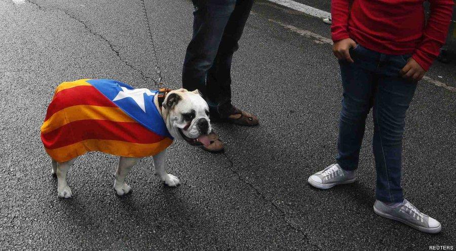 perro independencia