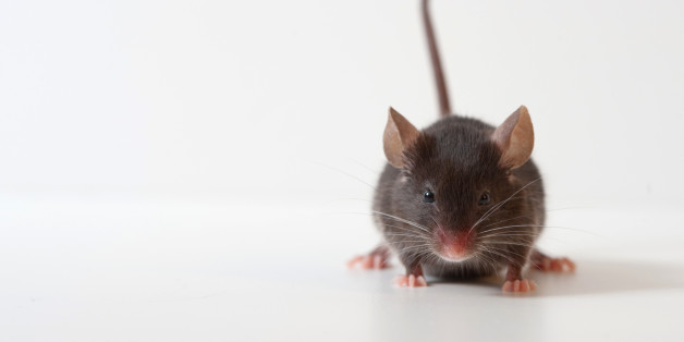 The group Friends of Medicare says it stands by its claim that a disabled patient at a long-term care home in southern Alberta was bitten by mice. (Shutterstock)