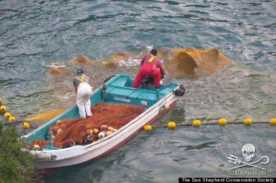 the sea shepherd conservation society