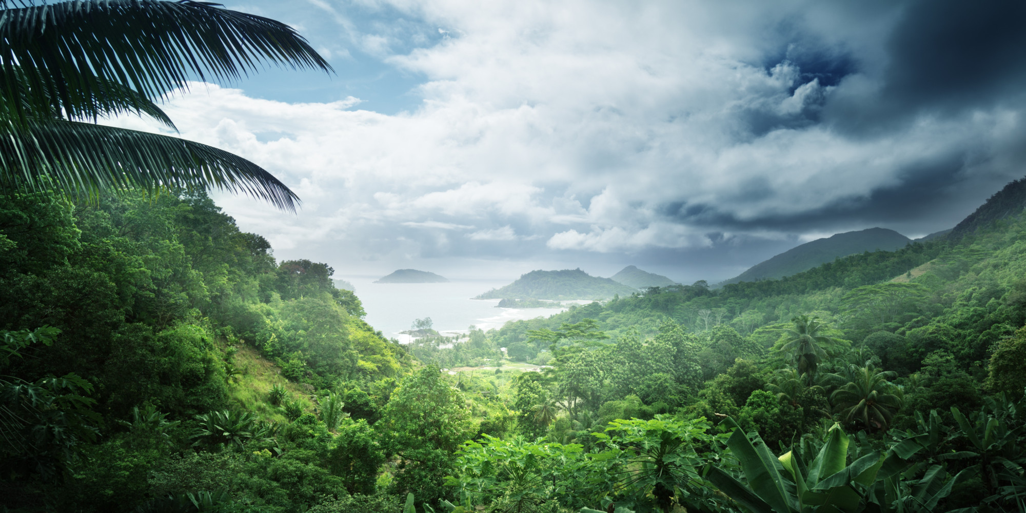 an overview of the amazon rainforest The amazon is the world's largest and densest rainforest with more diverse plants and animals than any other ecosystem in the world learn about the ecuadorian amazon rainforest on this page.