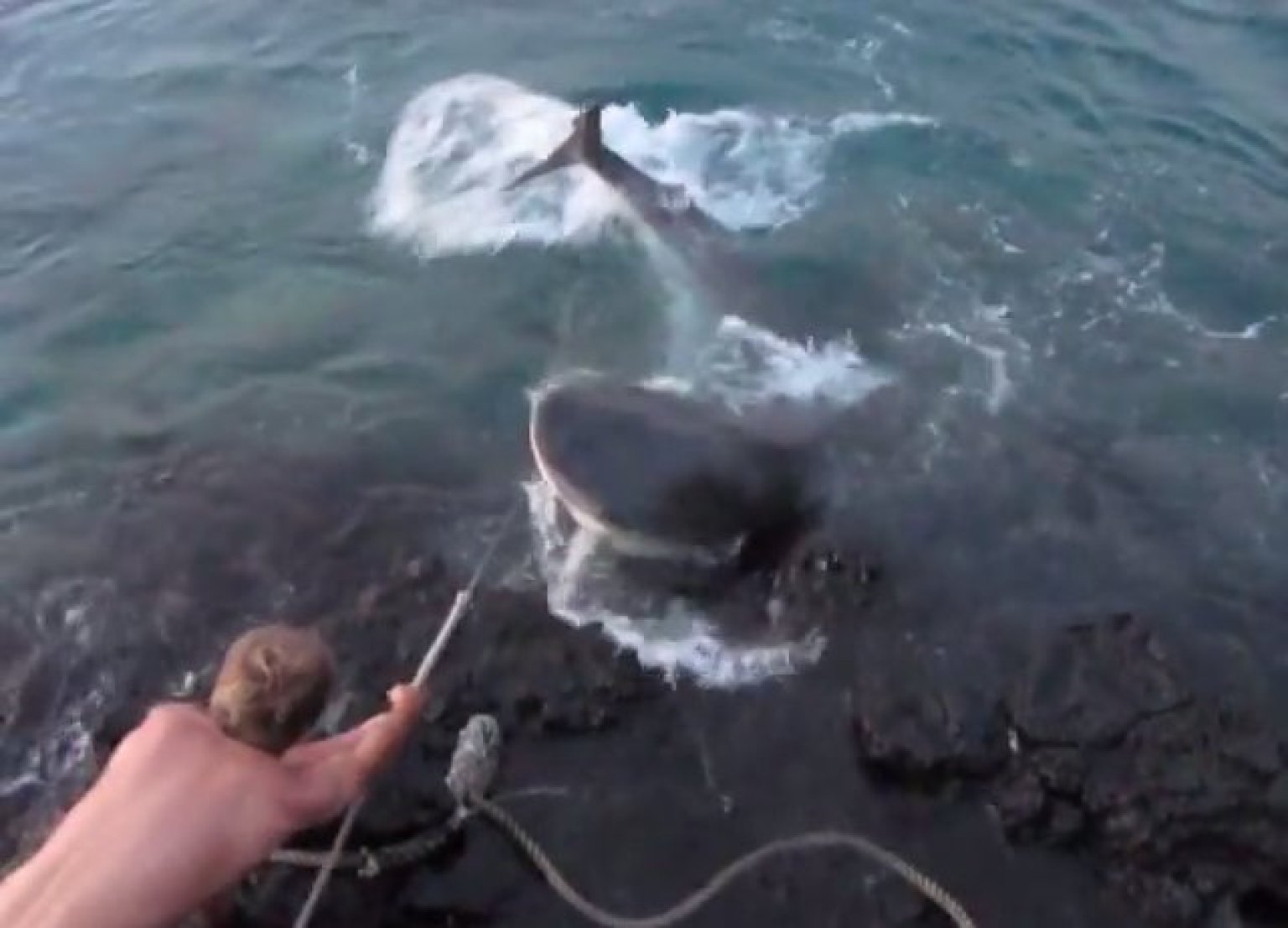 Video Of Tiger Shark Torture Sparks Outcry In Hawaii