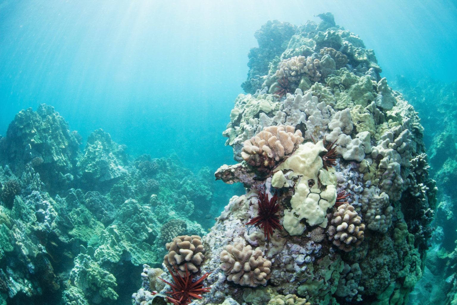 Molasses Spill Causing Coral Reef Death | HuffPost