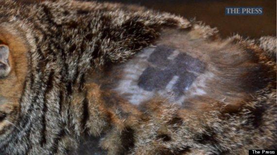 shaved cat swastika