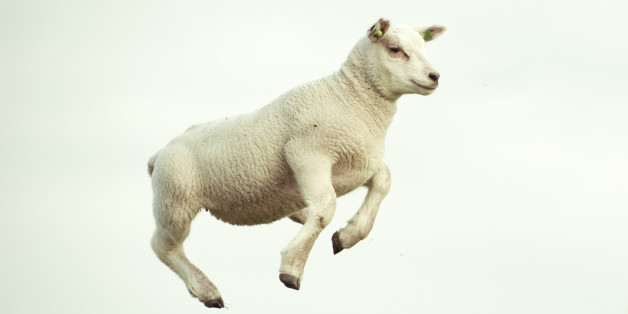 Paul Lovell denies attempting to have sex with a sheep (file picture)