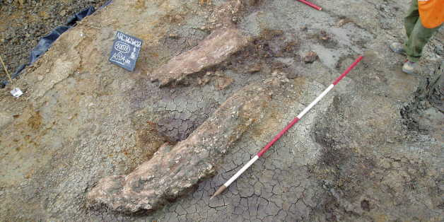 Prehistoric Elephant Butchery Site Sheds New Light On Early Humans' Hunting Habits