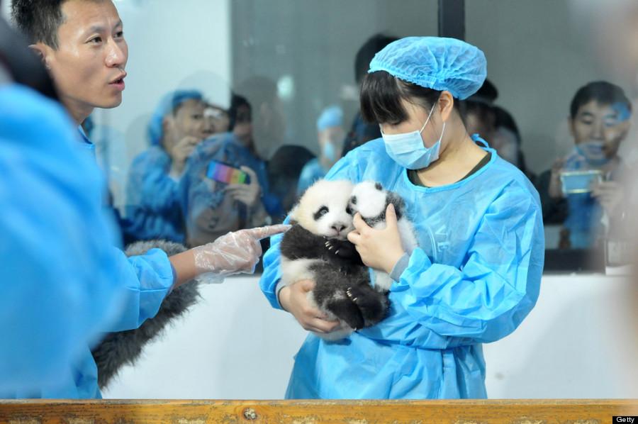 baby panda doctor