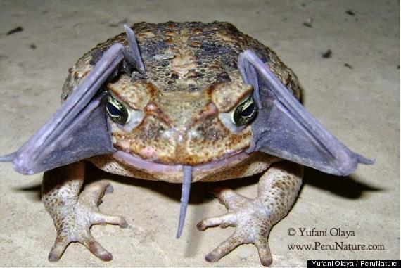 bat toad