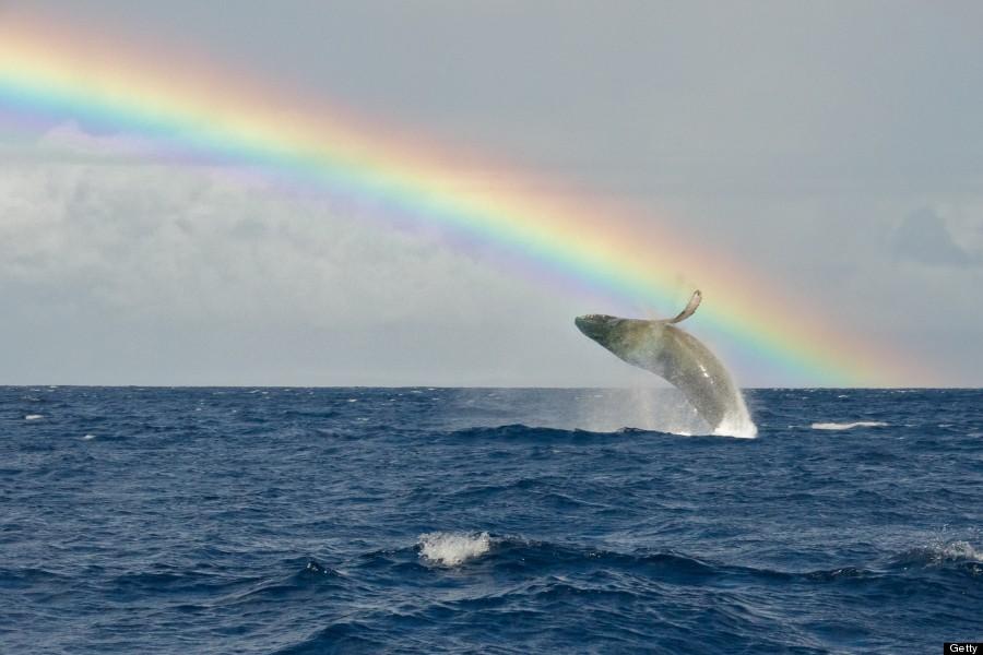 イルカと虹