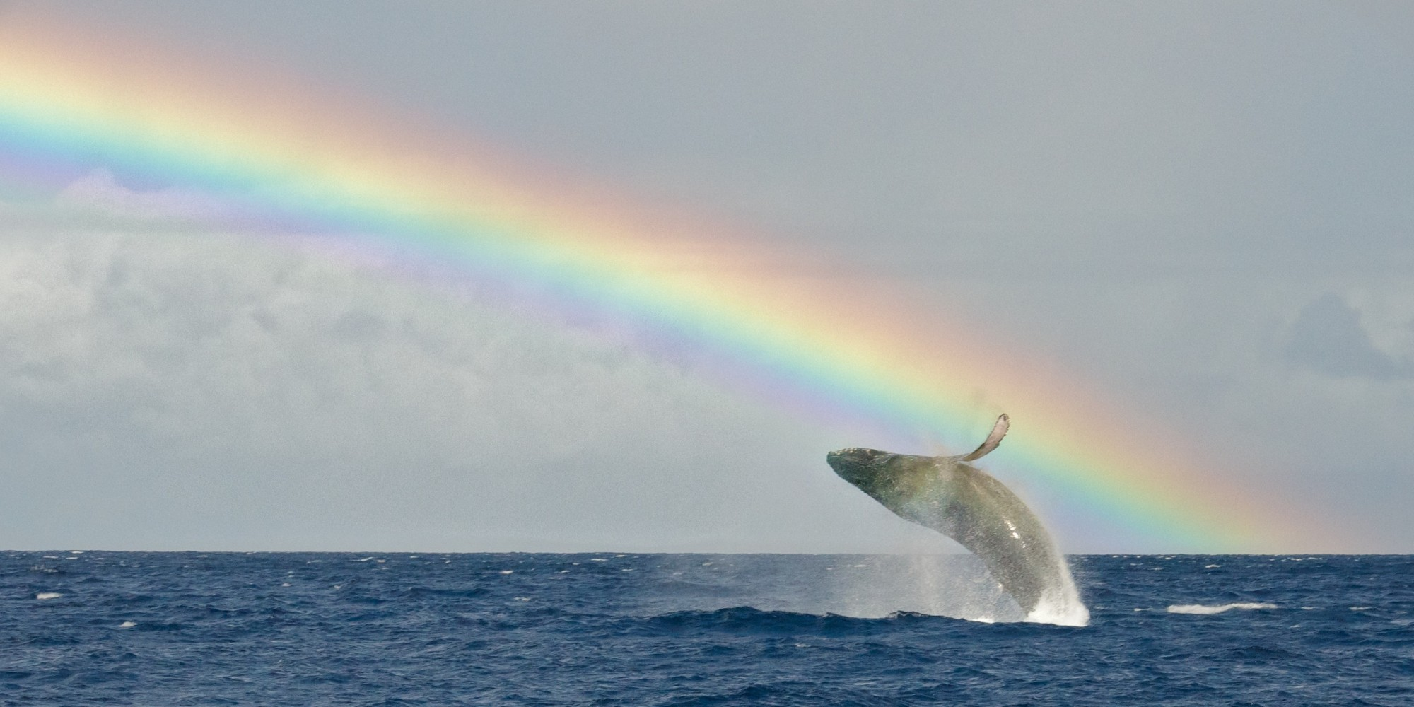 17 photos of hawaii rainbows to brighten your day huffpost