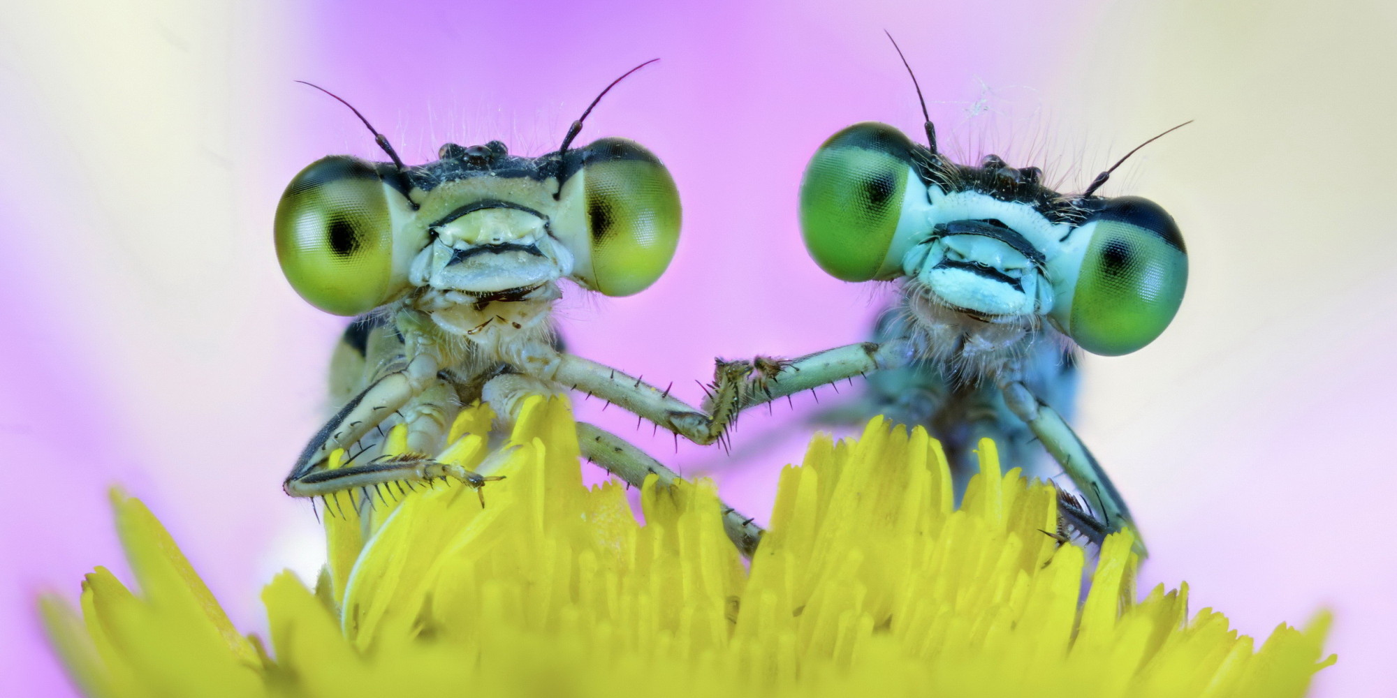 o-CUTE-INSECTS-facebook.jpg (2000×1000)