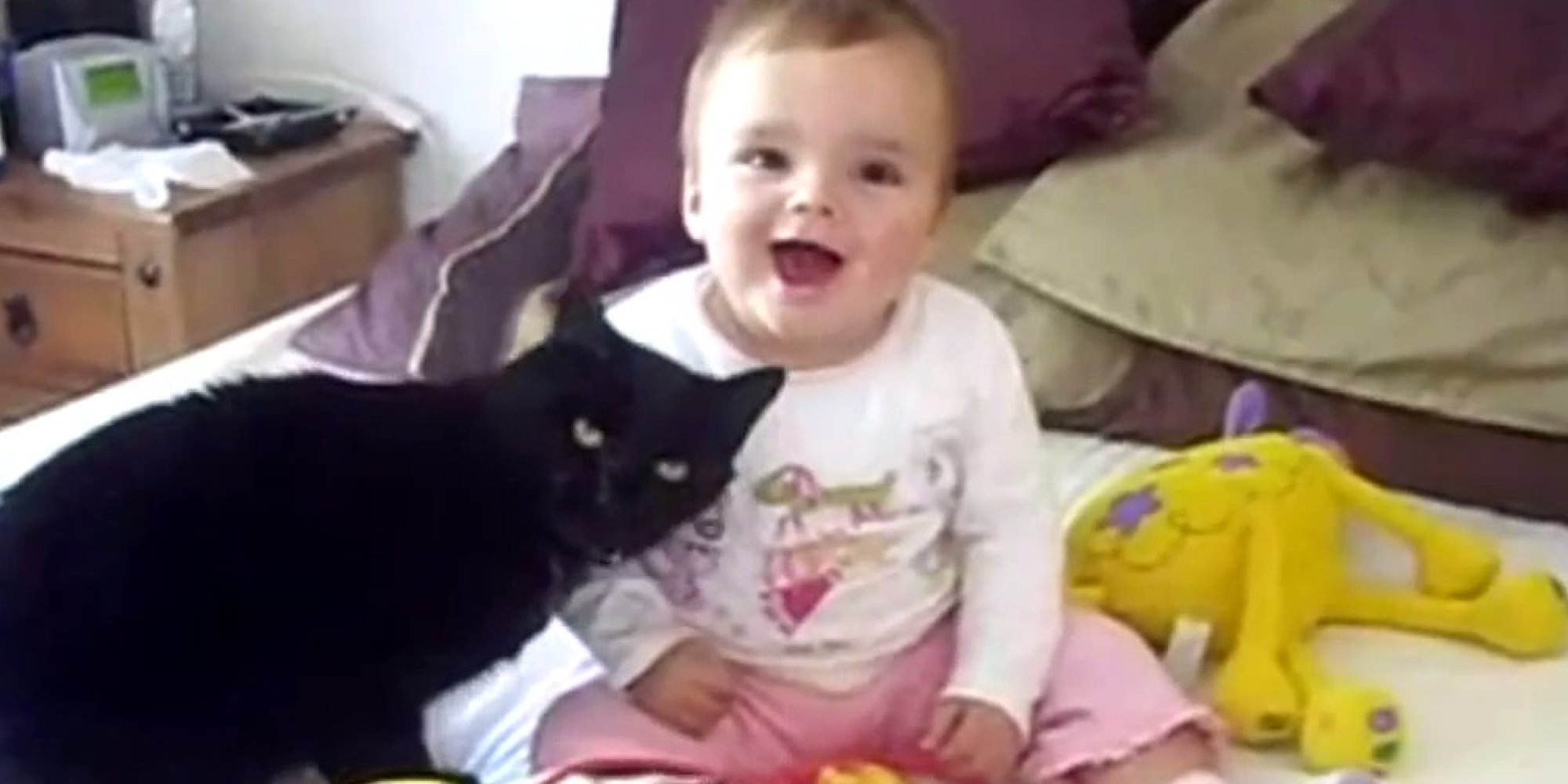 cats and babies cuddling