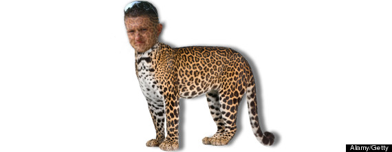 tommy robinson edl leopard