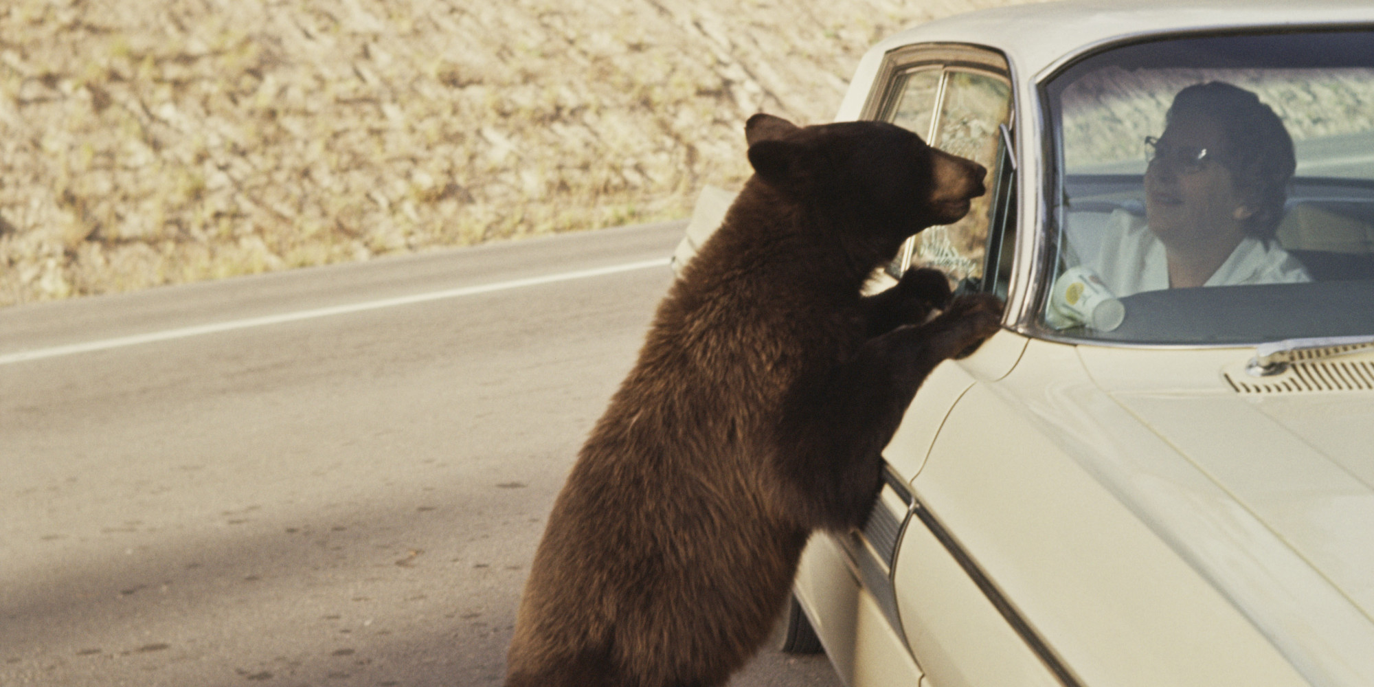 Can Bears Smell Food In A Car