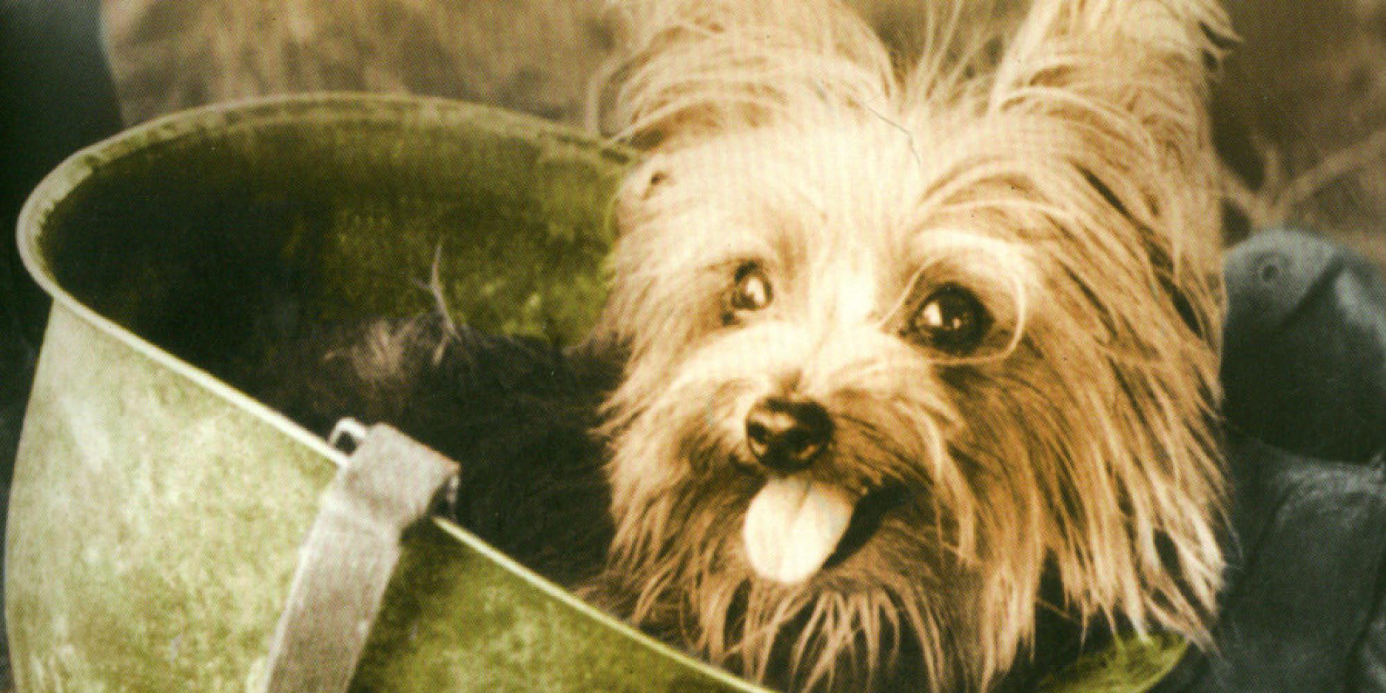 Amazing Animals Army Adorable Dog - o-SMOKY1-facebook  Image_213346  .jpg