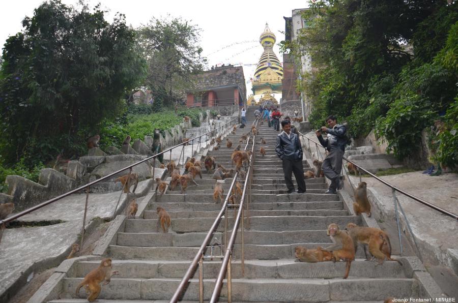 templo monos