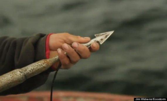 illegal dolphin hunt peru