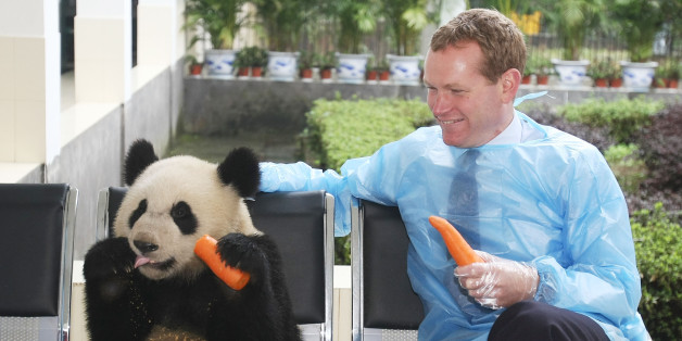 Jeremy Browne sits with a panda during a visit to China
