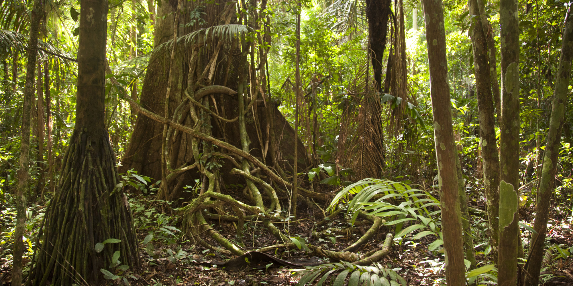 The Amazon Rain Forest Is Drying Out, Probably Because Of ...