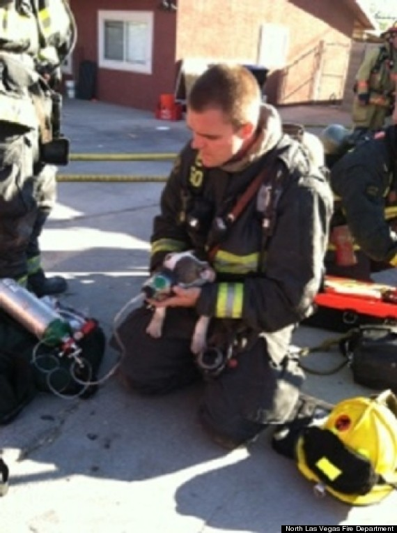 firefighters save puppies
