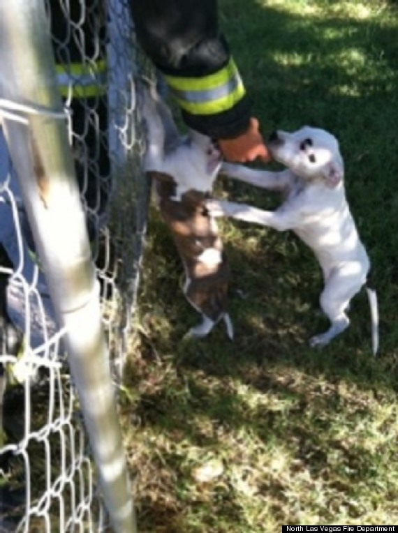 firefighters rescue puppies
