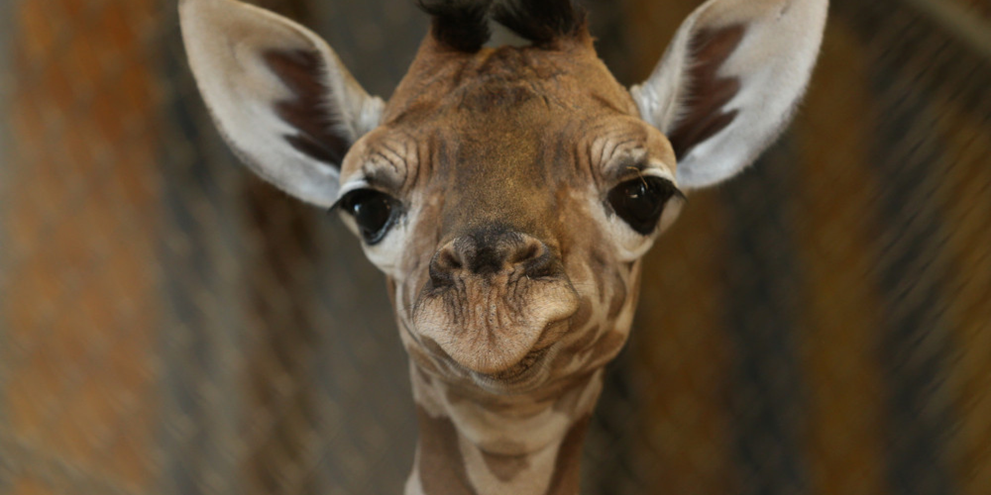 Heres why your facebook friends have become giraffes huffpost biocorpaavc Images