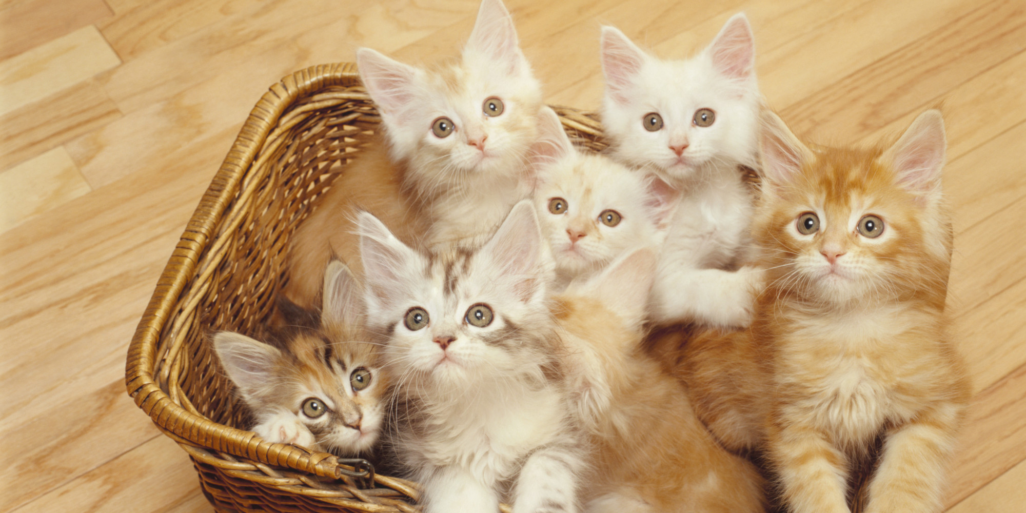 o NATIONAL CAT DAY facebook october 29 is national cat day show some respect huffpost