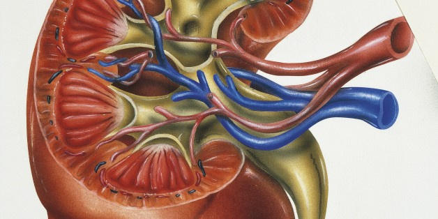 Reducing Belly Fat, Phosphorus Levels Could Reduce Kidney Disease ...