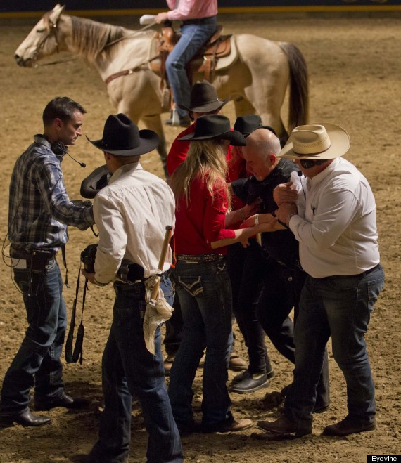 bull photographer