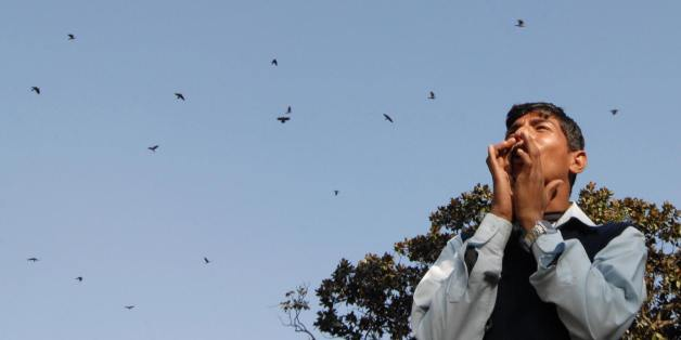Nepal's 'Bird Brother' Seeks To Highlight Conservation Through Shows, 'Crow Conferences'
