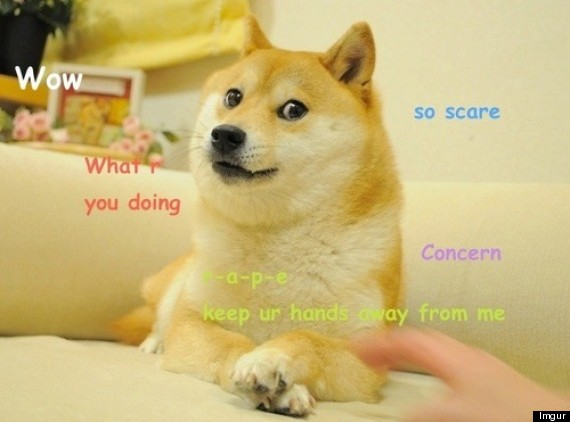 Doge The Shiba Inu Dog Meme Owns The Internet (PICTURES, GIFS)
